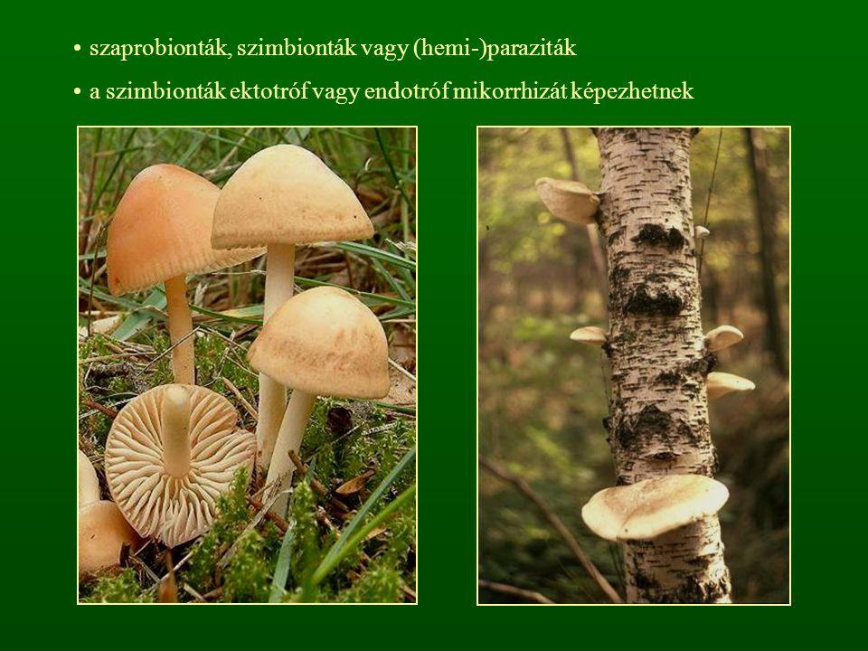 szaprobionták, szimbionták vagy (hemi-)paraziták