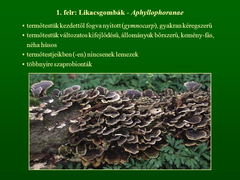 1. felr: Likacsgombák - Aphyllophoranae