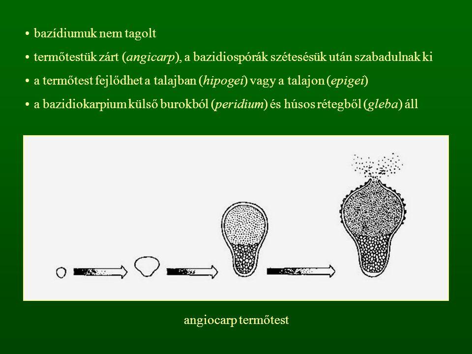 bazídiumuk nem tagolt termőtestük zárt (angicarp), a bazidiospórák szétesésük után szabadulnak ki.