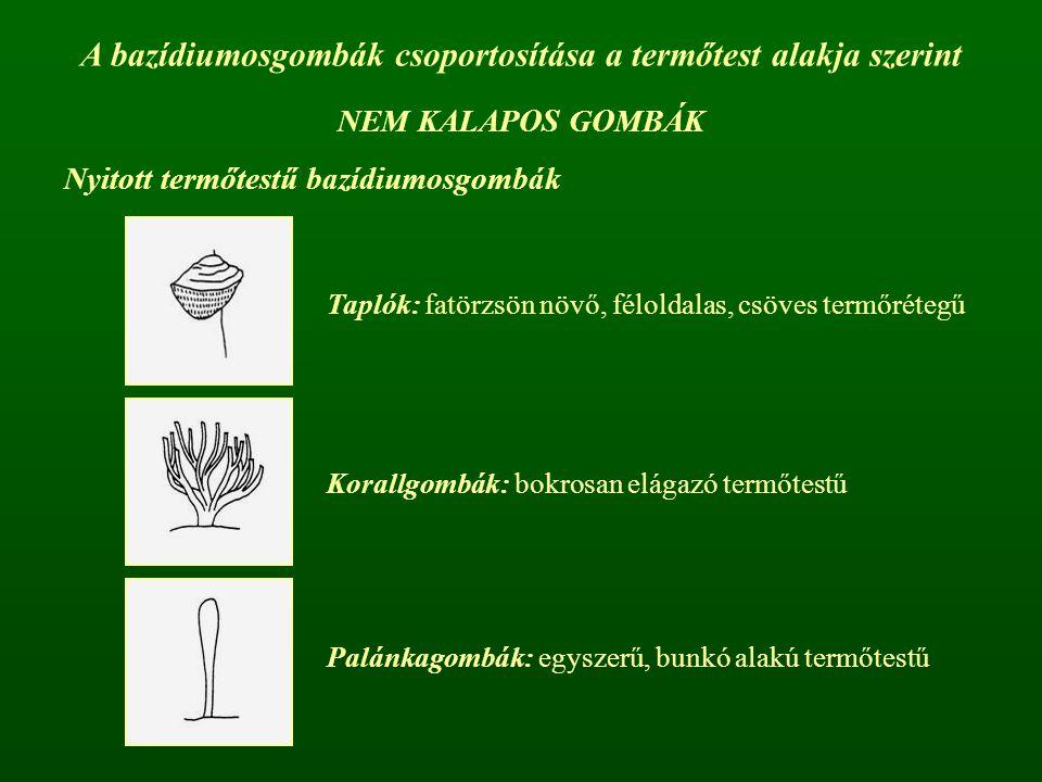A bazídiumosgombák csoportosítása a termőtest alakja szerint