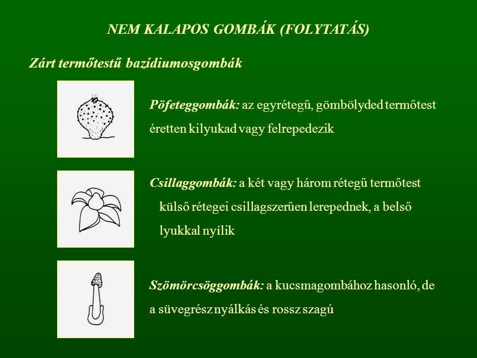 NEM KALAPOS GOMBÁK (FOLYTATÁS)