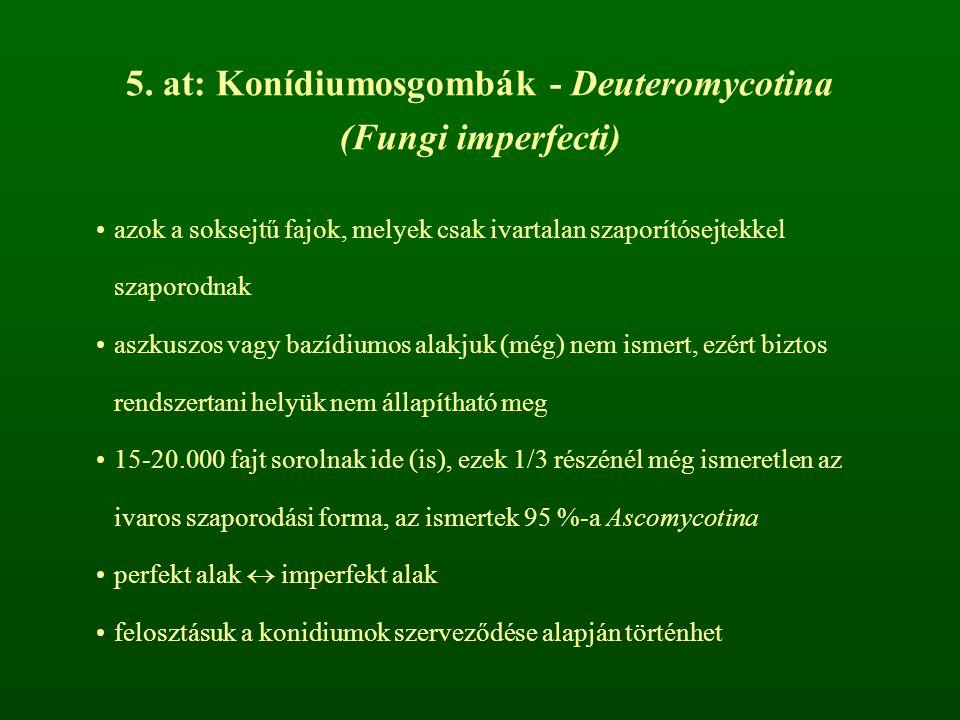 5. at: Konídiumosgombák - Deuteromycotina