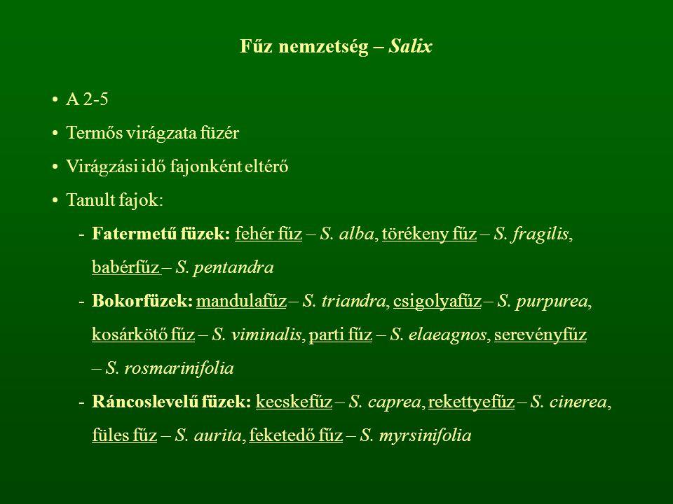 Fűz nemzetség – Salix A 2-5 Termős virágzata füzér