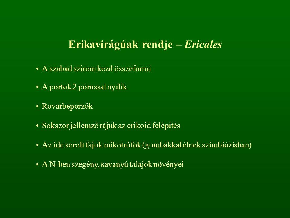 Erikavirágúak rendje – Ericales