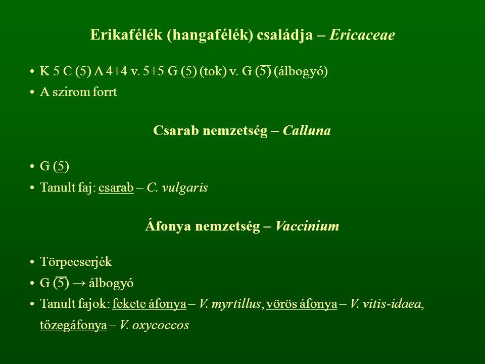 Erikafélék (hangafélék) családja – Ericaceae