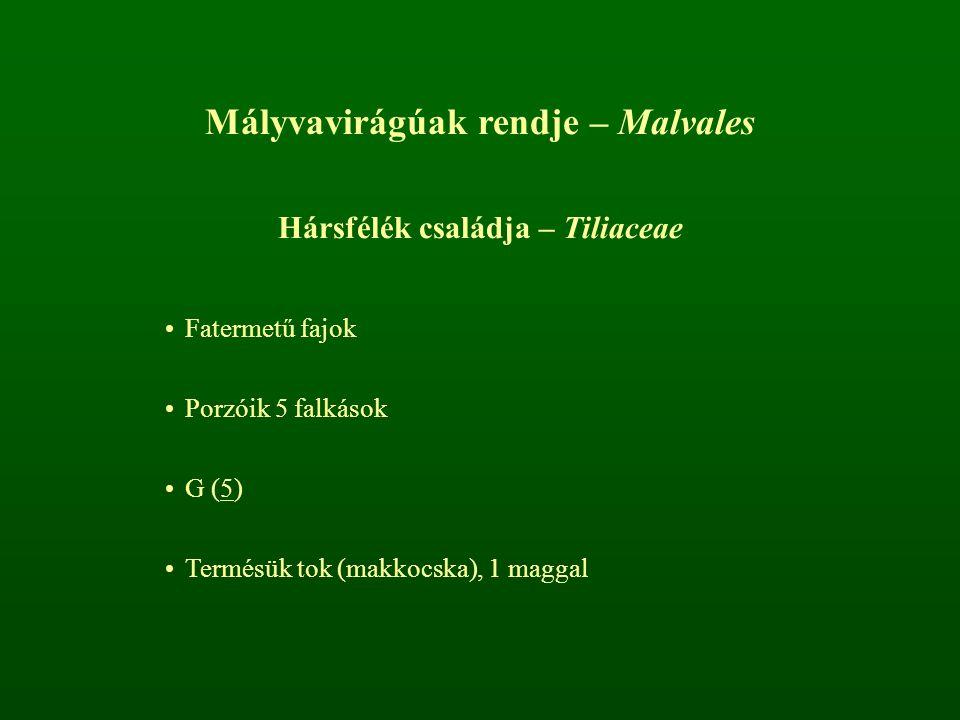 Mályvavirágúak rendje – Malvales Hársfélék családja – Tiliaceae