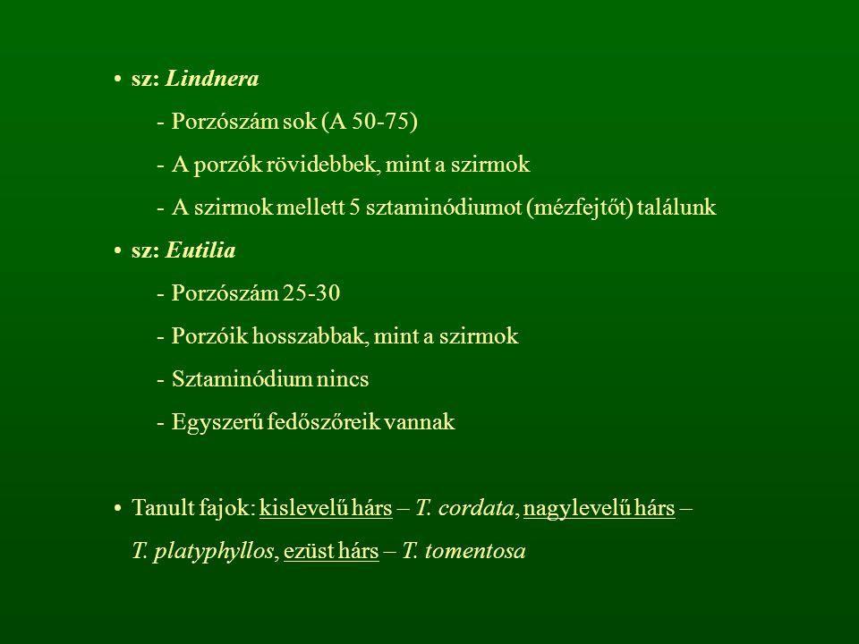 sz: Lindnera Porzószám sok (A 50-75) A porzók rövidebbek, mint a szirmok. A szirmok mellett 5 sztaminódiumot (mézfejtőt) találunk.