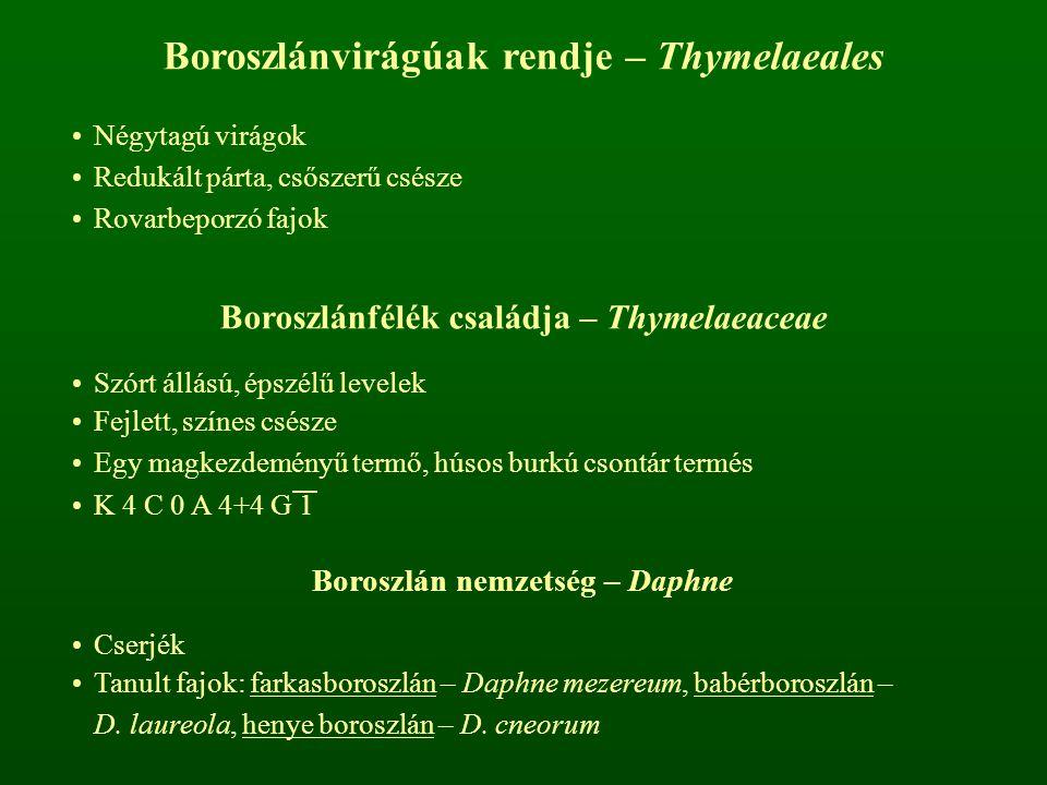 Boroszlánvirágúak rendje – Thymelaeales