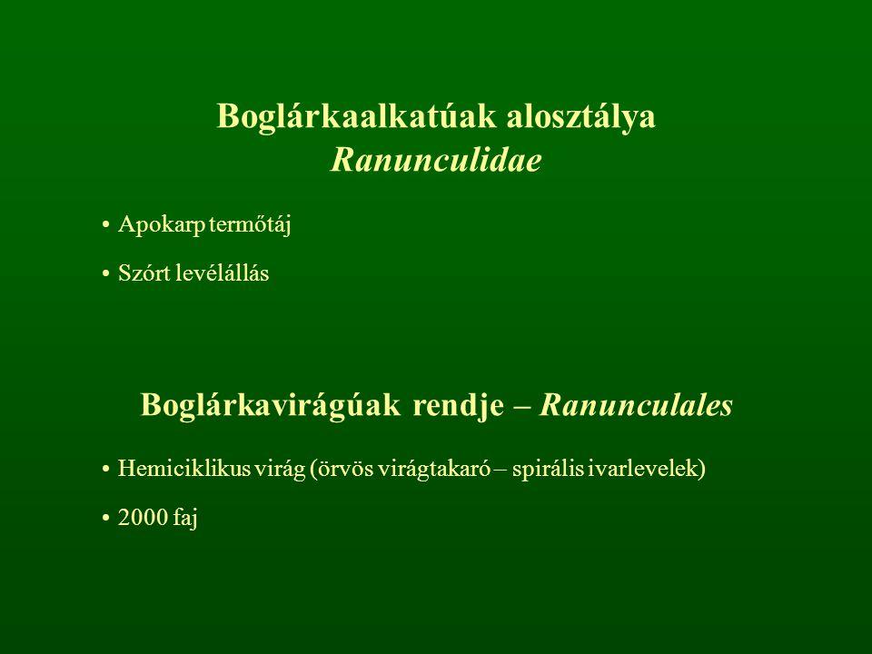 Boglárkaalkatúak alosztálya Boglárkavirágúak rendje – Ranunculales