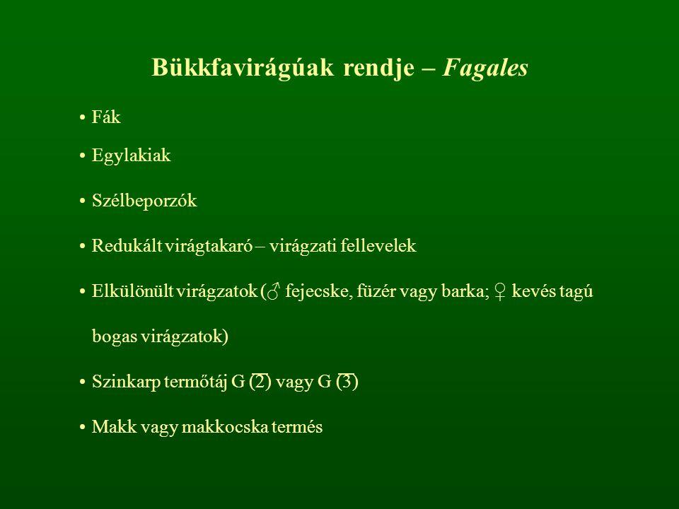 Bükkfavirágúak rendje – Fagales