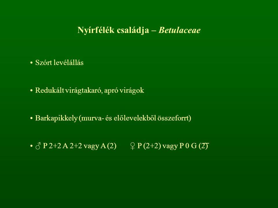 Nyírfélék családja – Betulaceae