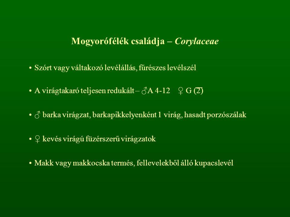 Mogyorófélék családja – Corylaceae