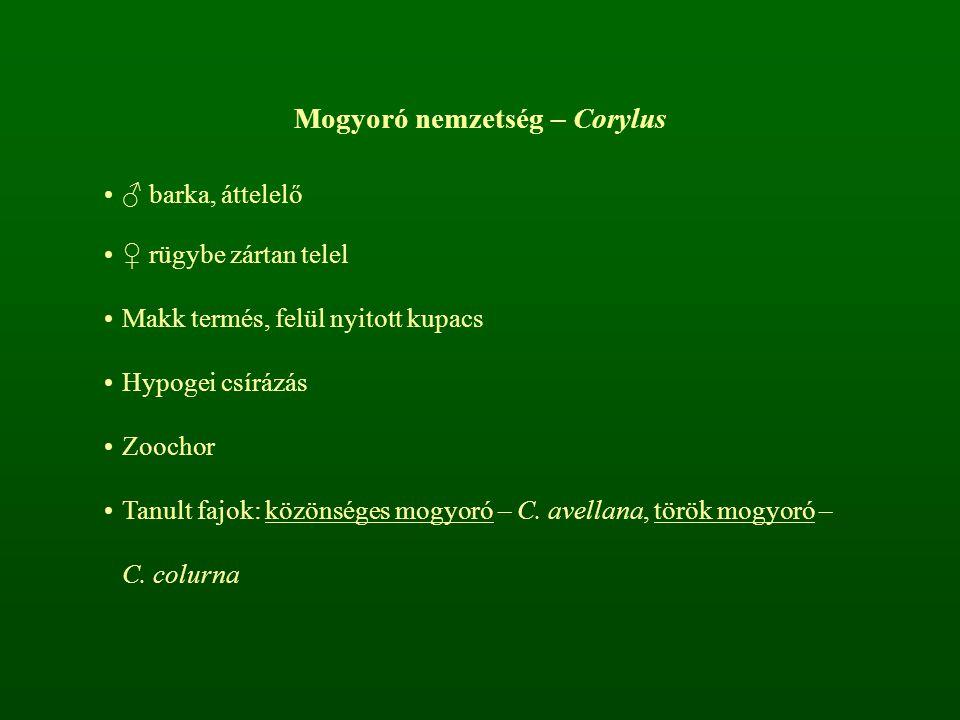 Mogyoró nemzetség – Corylus