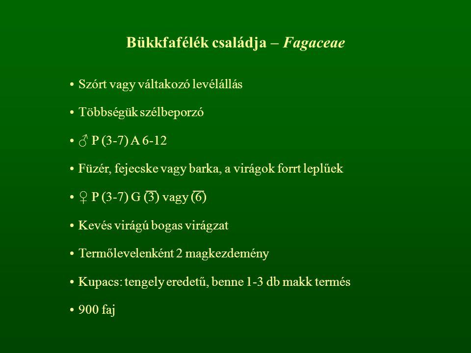 Bükkfafélék családja – Fagaceae