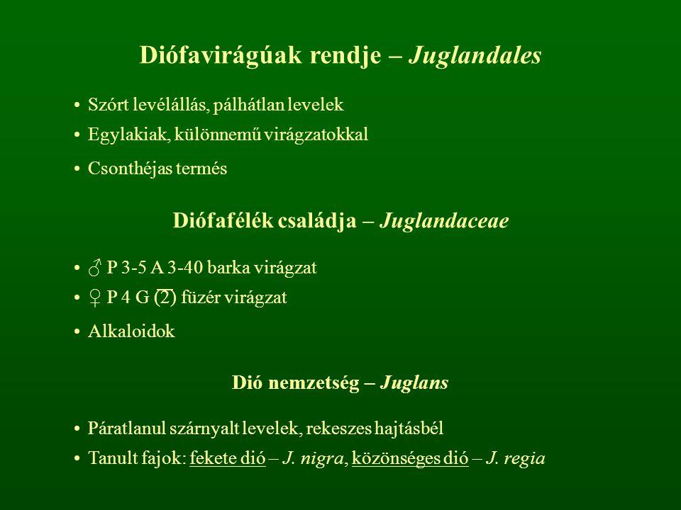 Diófavirágúak rendje – Juglandales