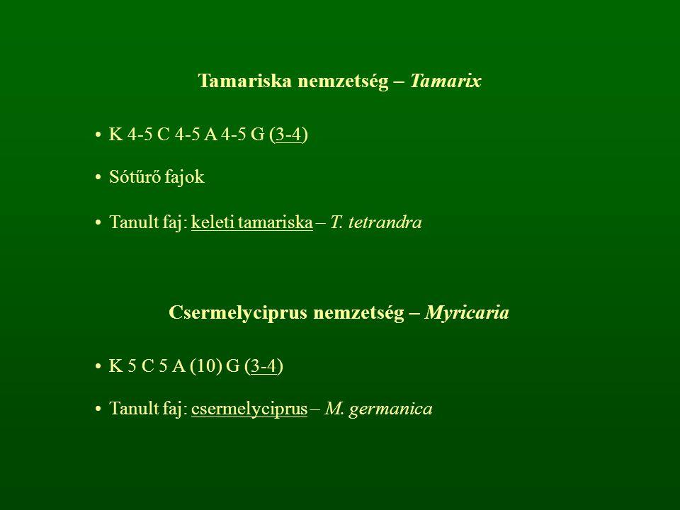 Tamariska nemzetség – Tamarix Csermelyciprus nemzetség – Myricaria
