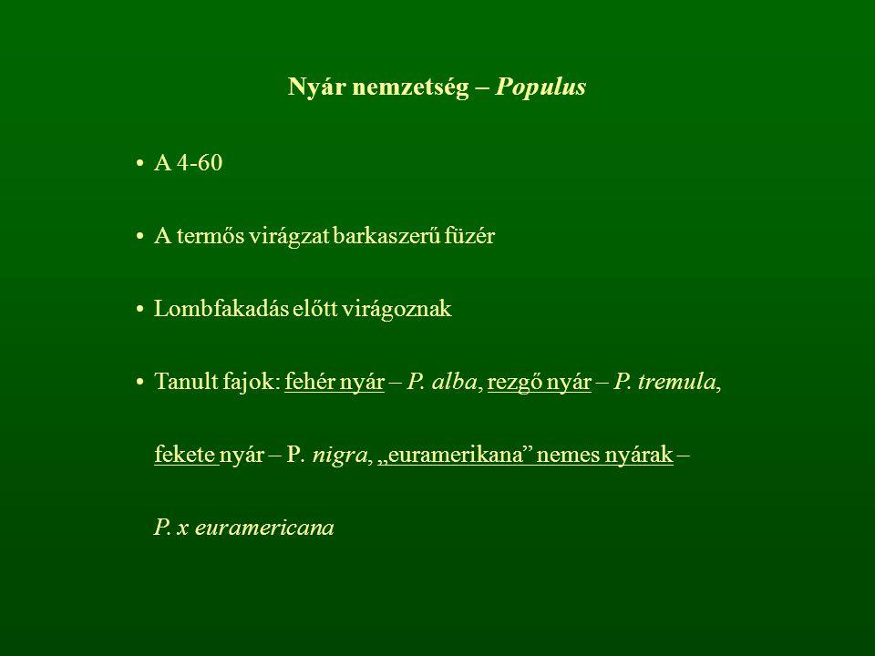 Nyár nemzetség – Populus