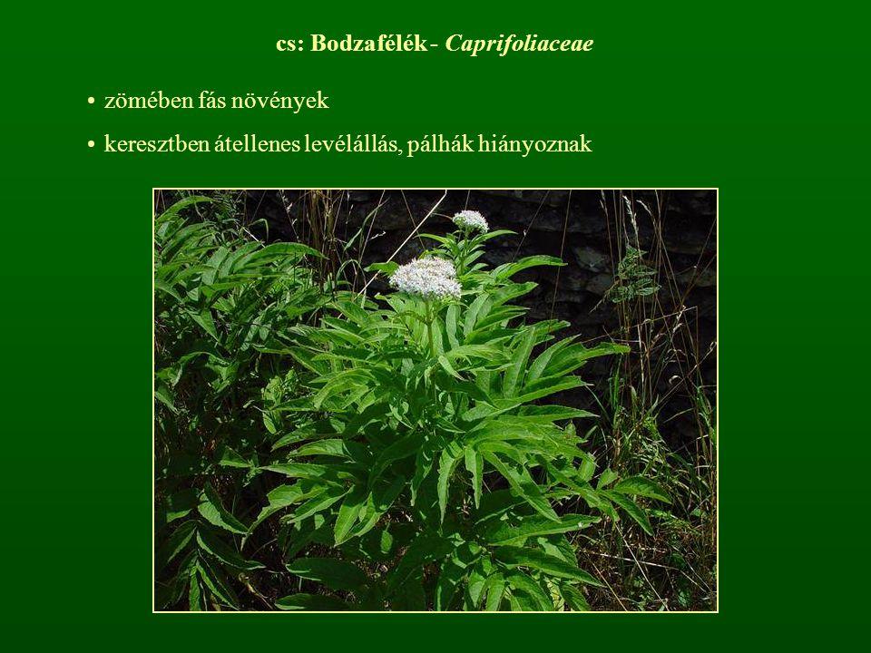 cs: Bodzafélék - Caprifoliaceae