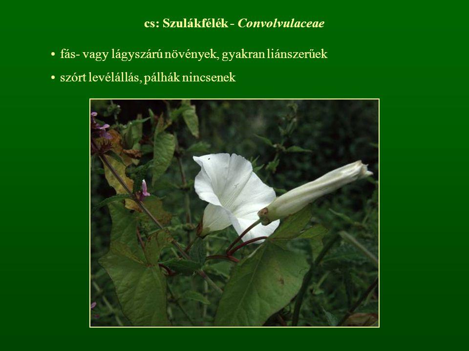 cs: Szulákfélék - Convolvulaceae