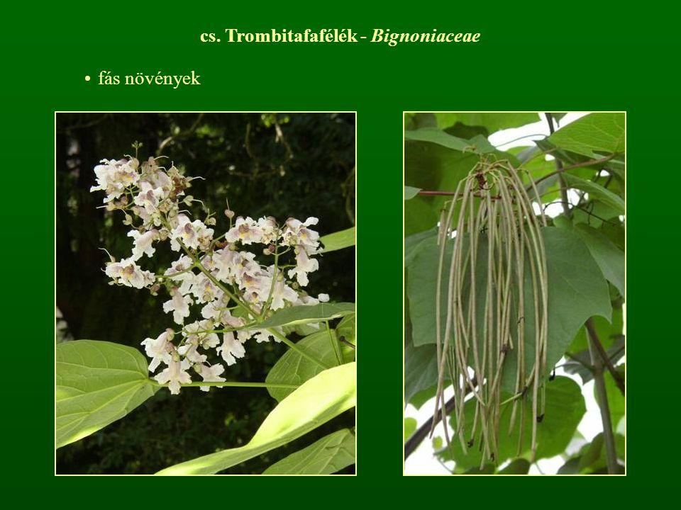 cs. Trombitafafélék - Bignoniaceae