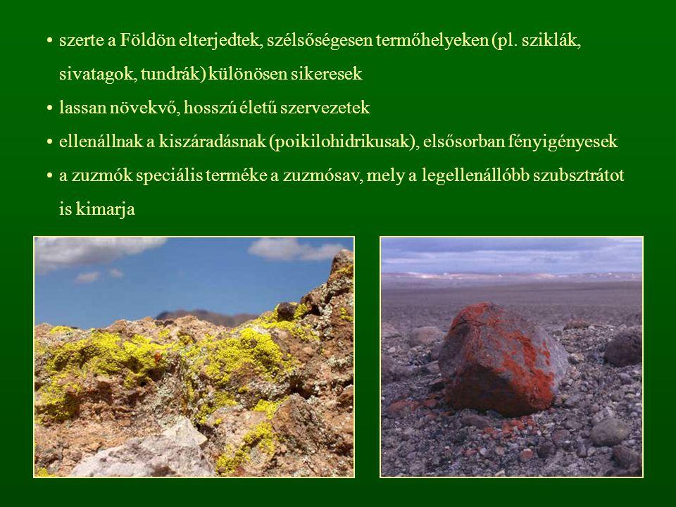 szerte a Földön elterjedtek, szélsőségesen termőhelyeken (pl