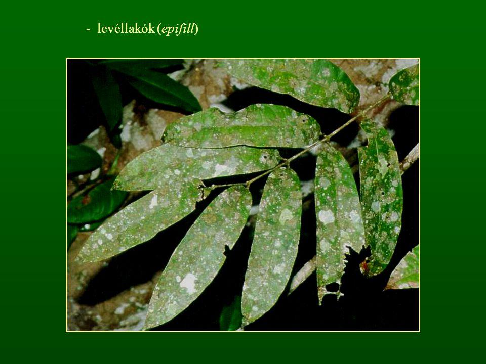 - levéllakók (epifill)