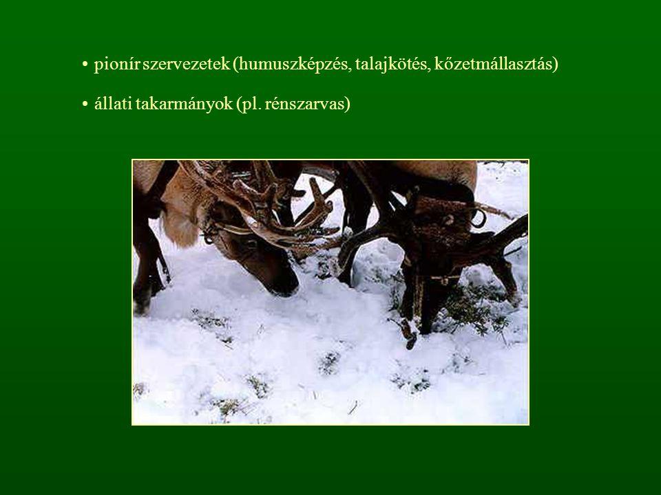 pionír szervezetek (humuszképzés, talajkötés, kőzetmállasztás)