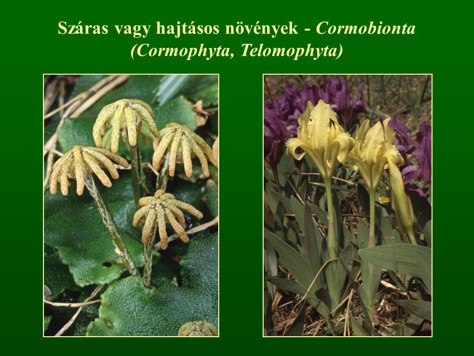 (Cormophyta, Telomophyta)