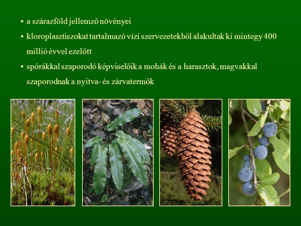 a szárazföld jellemző növényei