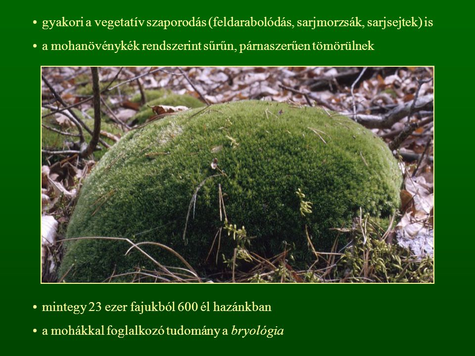 gyakori a vegetatív szaporodás (feldarabolódás, sarjmorzsák, sarjsejtek) is