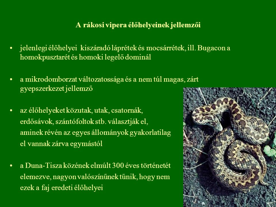 A rákosi vipera élőhelyeinek jellemzői