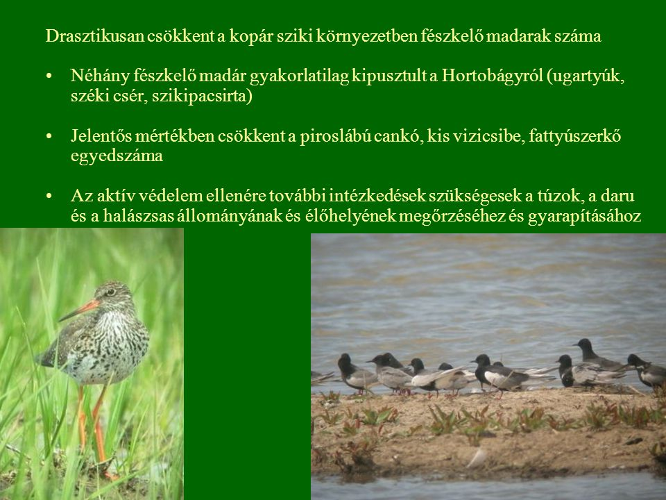 Drasztikusan csökkent a kopár sziki környezetben fészkelő madarak száma