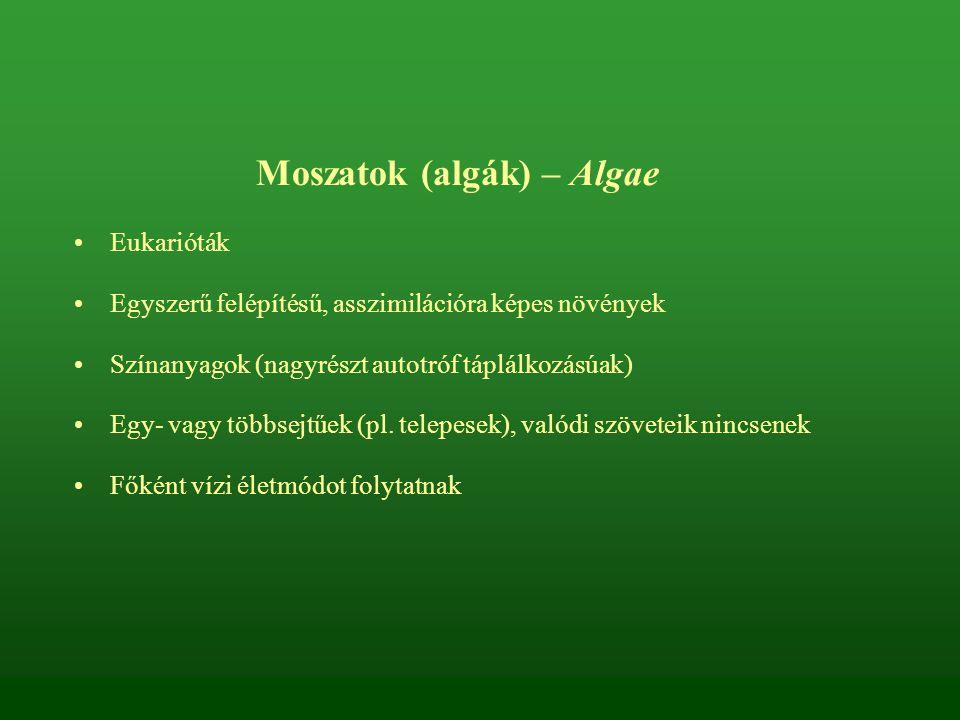 Moszatok (algák) – Algae
