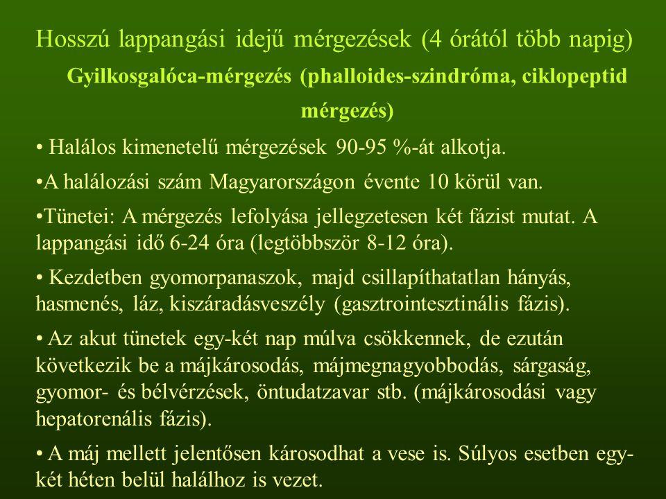 Hosszú lappangási idejű mérgezések (4 órától több napig) Gyilkosgalóca-mérgezés (phalloides-szindróma, ciklopeptid mérgezés)