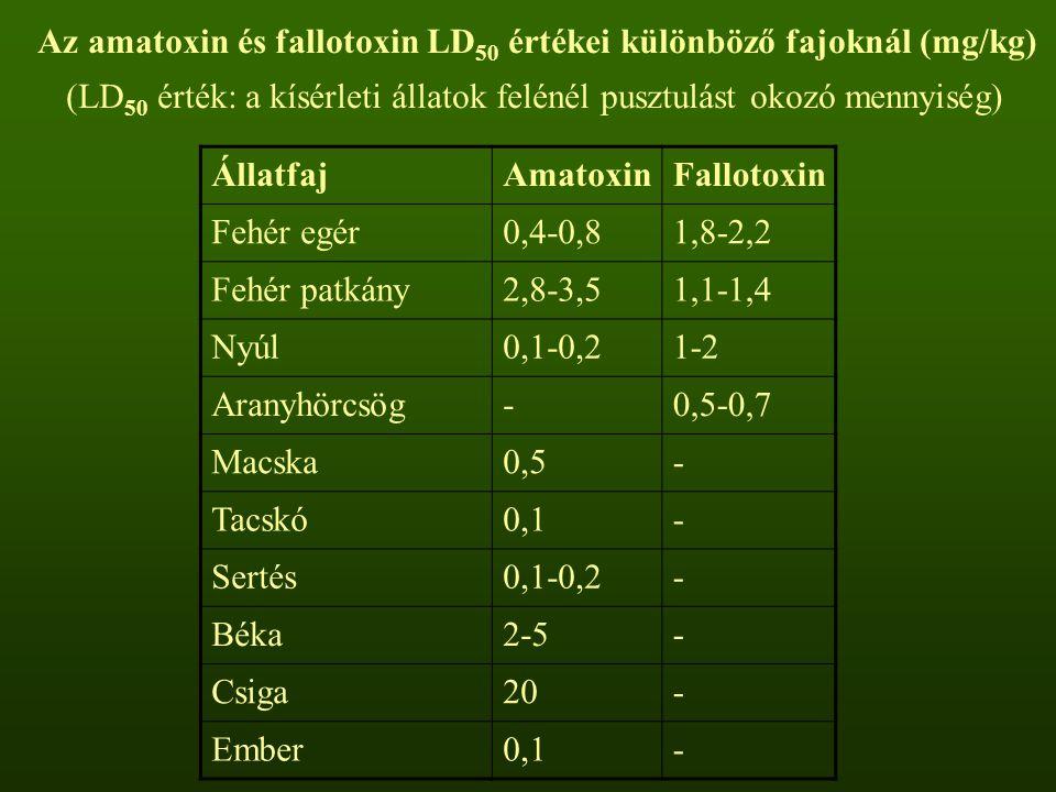 Az amatoxin és fallotoxin LD50 értékei különböző fajoknál (mg/kg)