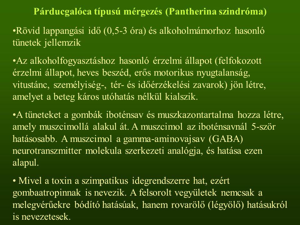 Párducgalóca típusú mérgezés (Pantherina szindróma)