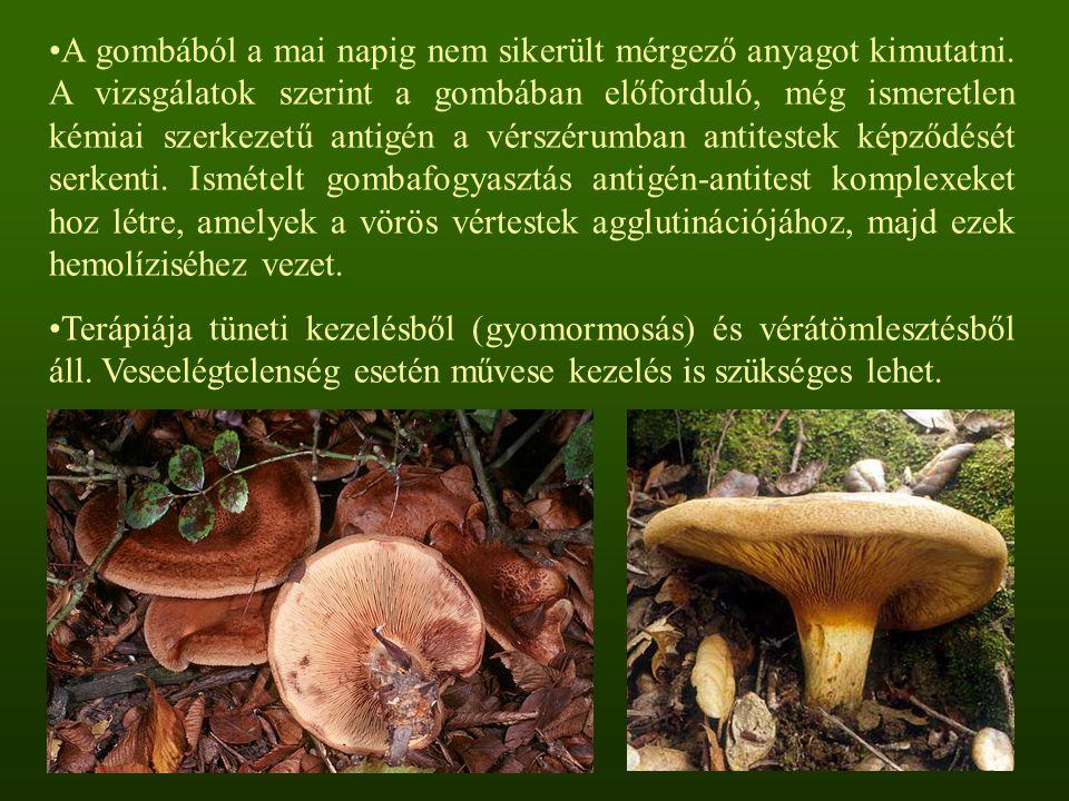 A gombából a mai napig nem sikerült mérgező anyagot kimutatni