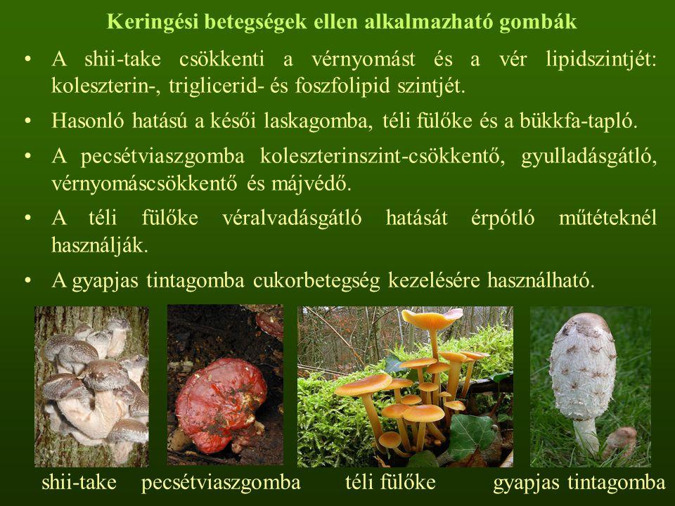 Keringési betegségek ellen alkalmazható gombák