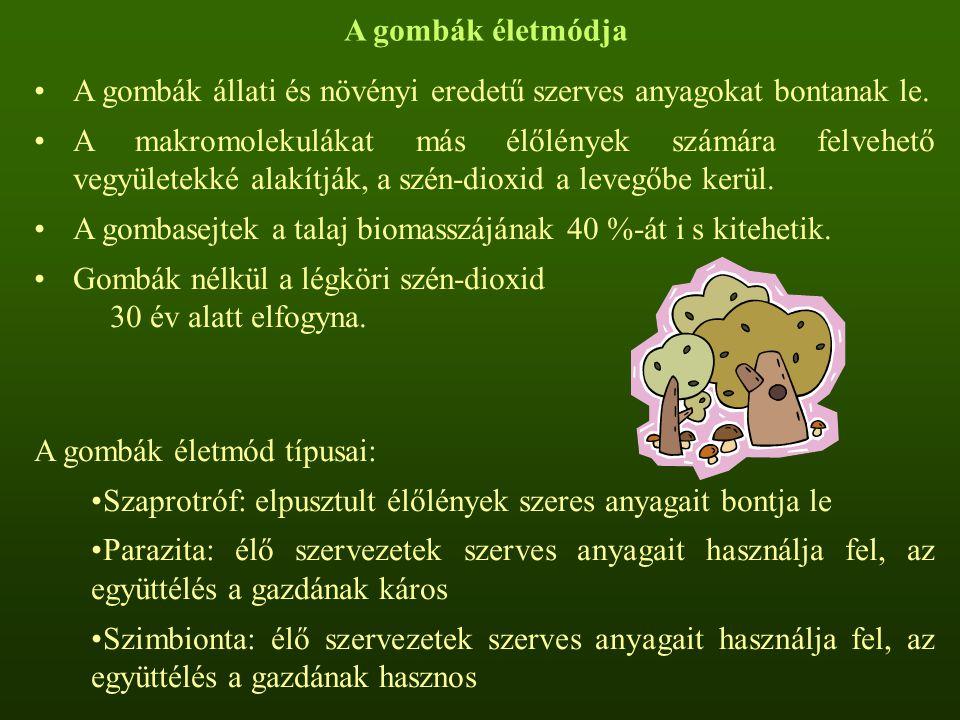 A gombák életmódja A gombák állati és növényi eredetű szerves anyagokat bontanak le.