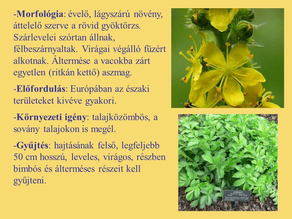 -Morfológia: évelő, lágyszárú növény, áttelelő szerve a rövid gyöktörzs. Szárlevelei szórtan állnak, félbeszárnyaltak. Virágai végálló füzért alkotnak. Áltermése a vacokba zárt egyetlen (ritkán kettő) aszmag.