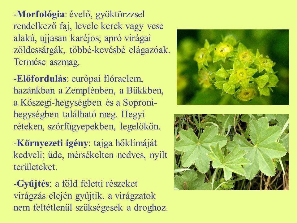 -Morfológia: évelő, gyöktörzzsel rendelkező faj, levele kerek vagy vese alakú, ujjasan karéjos; apró virágai zöldessárgák, többé-kevésbé elágazóak. Termése aszmag.