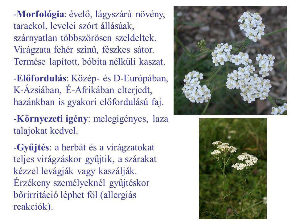 -Morfológia: évelő, lágyszárú növény, tarackol, levelei szórt állásúak, szárnyatlan többszörösen szeldeltek. Virágzata fehér színű, fészkes sátor. Termése lapított, bóbita nélküli kaszat.