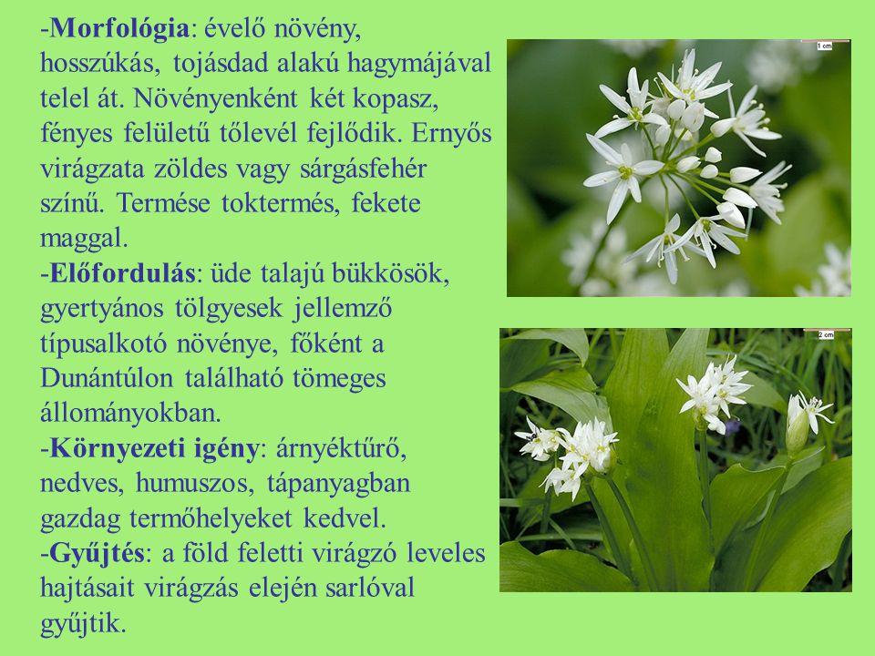 -Morfológia: évelő növény, hosszúkás, tojásdad alakú hagymájával telel át. Növényenként két kopasz, fényes felületű tőlevél fejlődik. Ernyős virágzata zöldes vagy sárgásfehér színű. Termése toktermés, fekete maggal.