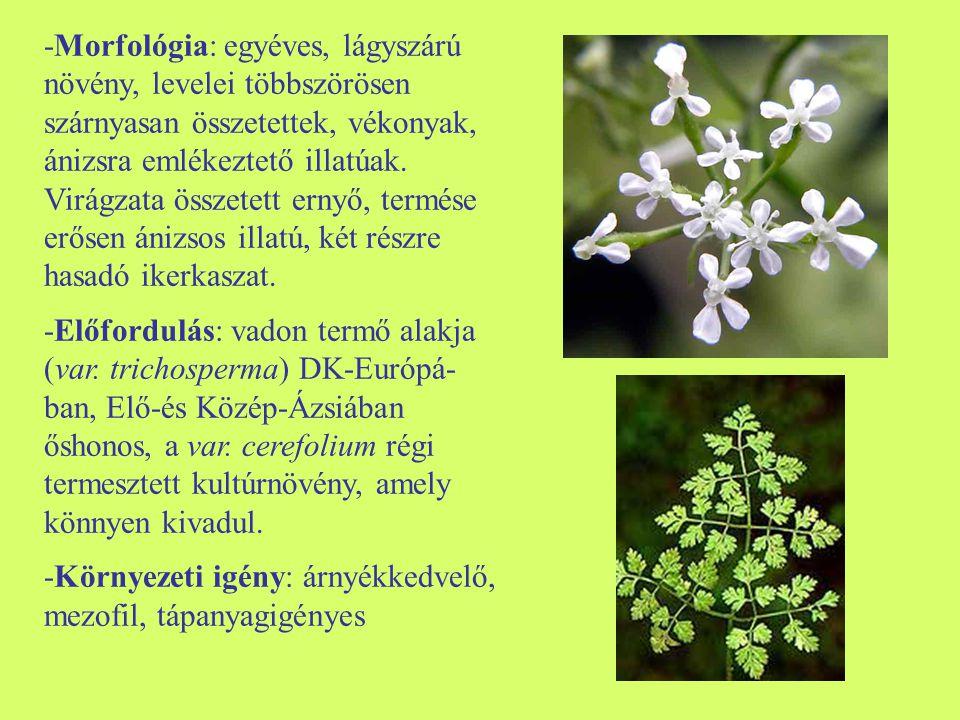 -Morfológia: egyéves, lágyszárú növény, levelei többszörösen szárnyasan összetettek, vékonyak, ánizsra emlékeztető illatúak. Virágzata összetett ernyő, termése erősen ánizsos illatú, két részre hasadó ikerkaszat.