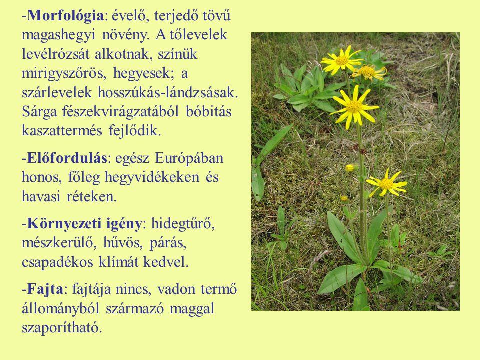-Morfológia: évelő, terjedő tövű magashegyi növény