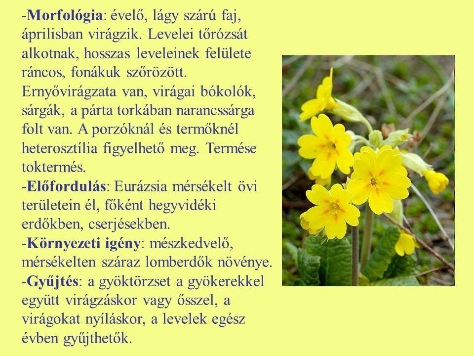 -Morfológia: évelő, lágy szárú faj, áprilisban virágzik