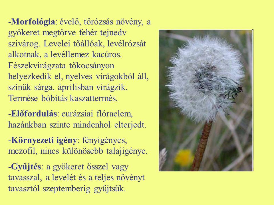 -Morfológia: évelő, tőrózsás növény, a gyökeret megtörve fehér tejnedv szivárog. Levelei tőállóak, levélrózsát alkotnak, a levéllemez kacúros. Fészekvirágzata tőkocsányon helyezkedik el, nyelves virágokból áll, színük sárga, áprilisban virágzik. Termése bóbitás kaszattermés.