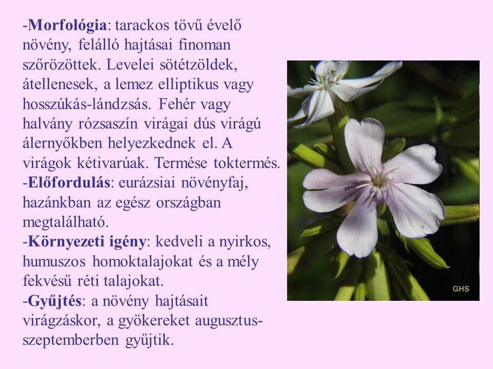 -Morfológia: tarackos tövű évelő növény, felálló hajtásai finoman szőrözöttek. Levelei sötétzöldek, átellenesek, a lemez elliptikus vagy hosszúkás-lándzsás. Fehér vagy halvány rózsaszín virágai dús virágú álernyőkben helyezkednek el. A virágok kétivarúak. Termése toktermés.