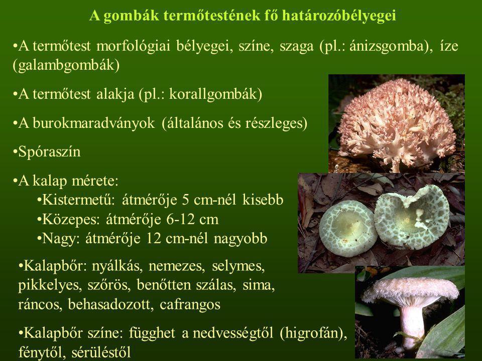 A gombák termőtestének fő határozóbélyegei