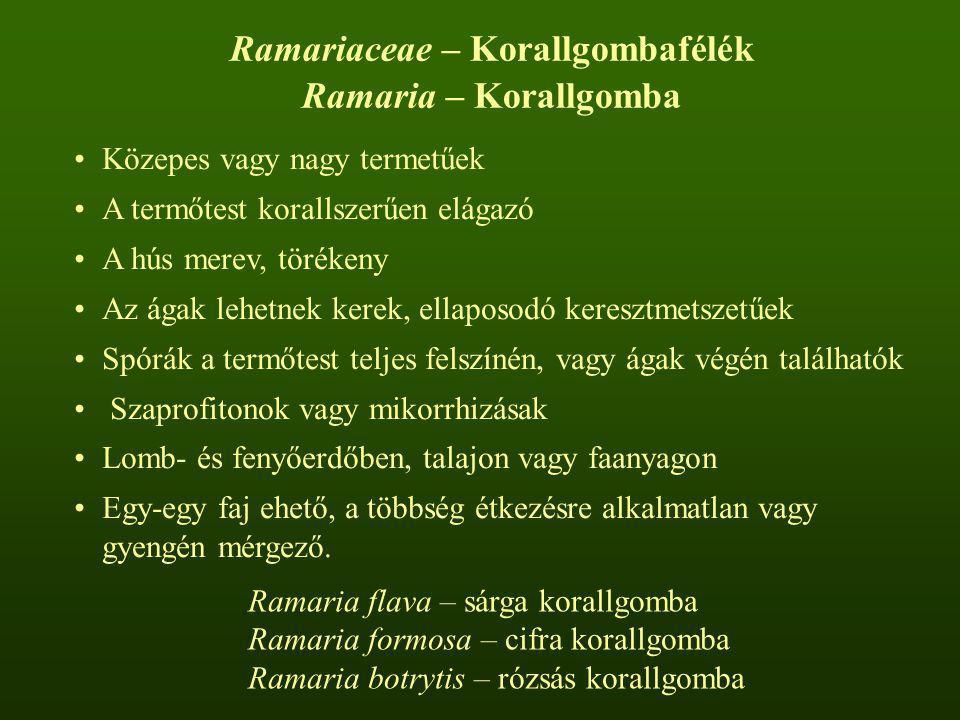 Ramariaceae – Korallgombafélék